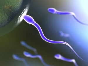 A successful sperm entering and egg rendered in 3D with raytraced textures and hdri lighting.